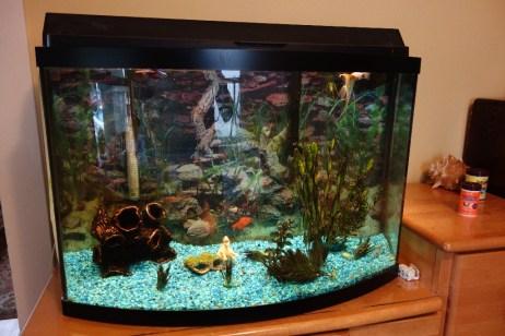 """Aquarium in """"my"""" office"""