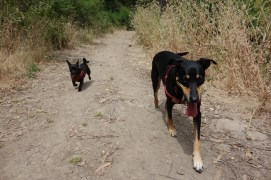 Off leash in the Oakland hills, where we used to take our own dogs Darwin and Kali