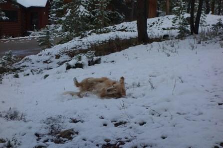 Oscar loves the snow!