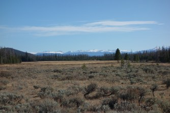 We saw one elk in the distance when stopped at this meadow