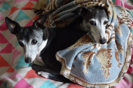 Frida and Elvis love their blankets