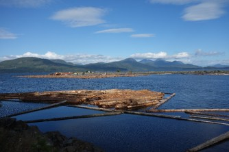 Logging is big business on the island