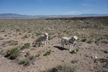 Walk on the mesa with Fitz and Beck