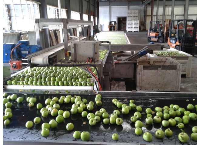 The Apple factory in Stanthorpe