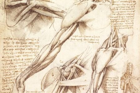 Leonardo Da Vinci Anatomy 4k Pictures 4k Pictures Full Hq