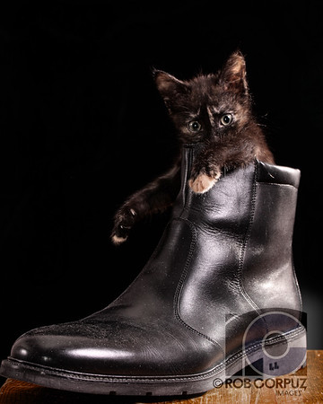 PUSS N' BOOT