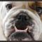 Leading Like a Bulldog: Persistence