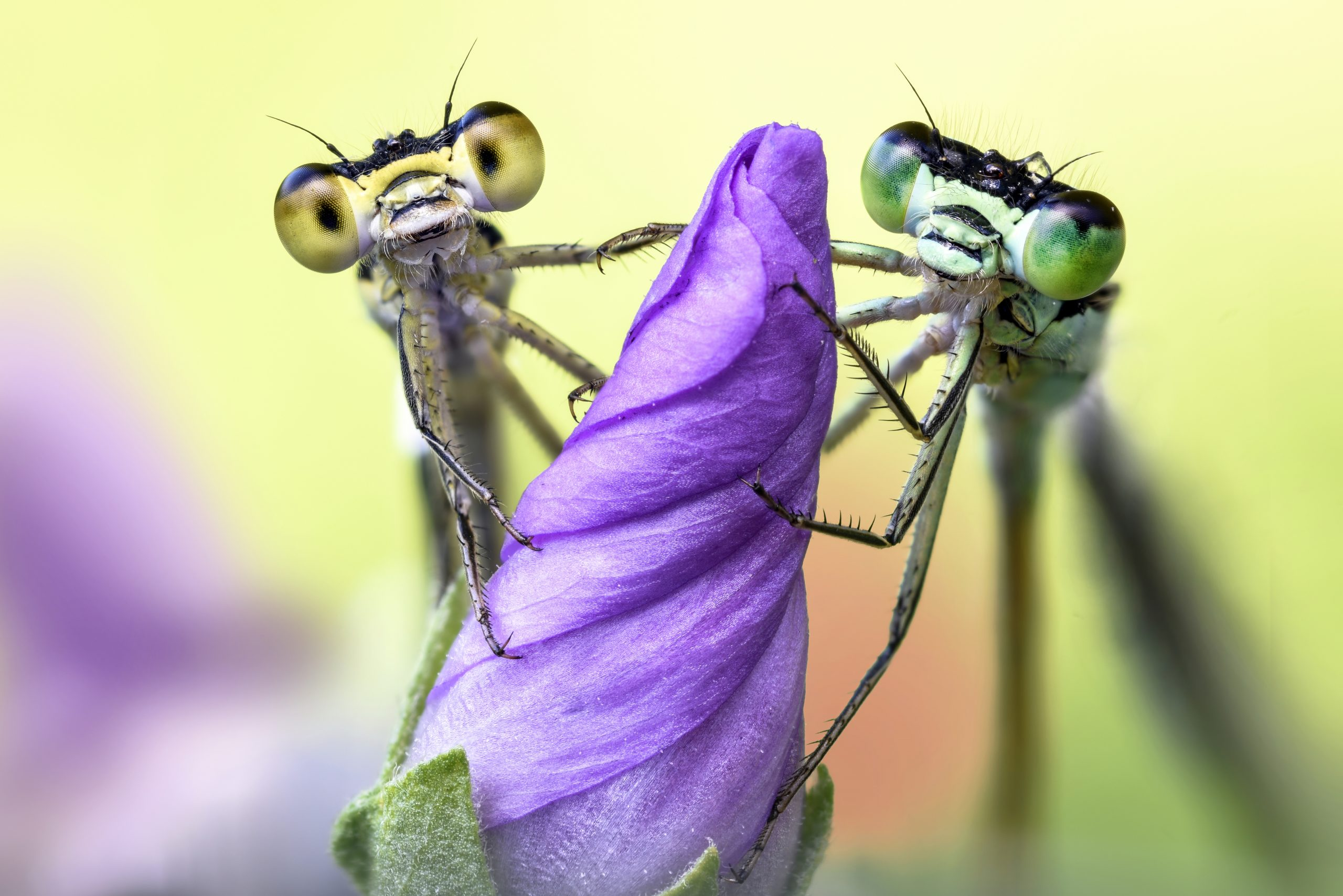 The wild world of insect photography