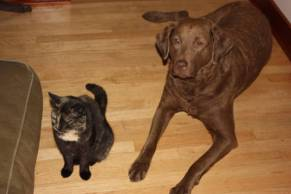 cat and dog sitting side-by-side