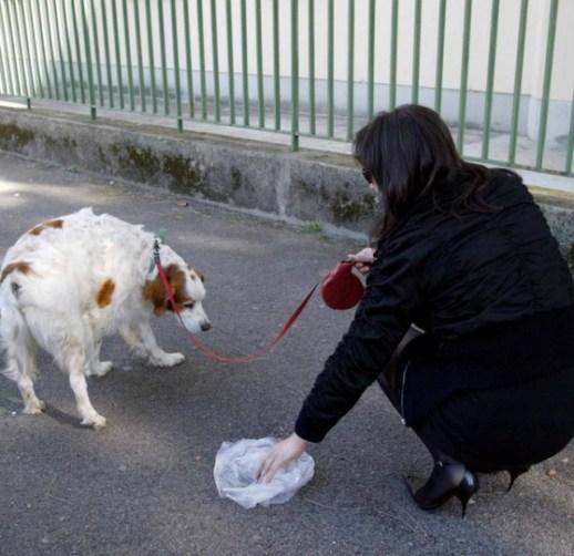 I bisogni degli animali domestici nei marciapiedi delle città