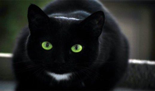In Italia il gatto nero è ancora indice di sventura.