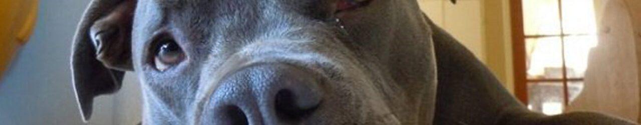 Cani e gatti ci salvano dal cattivo umore durante il coronavirus