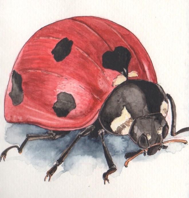 cropped ladybug_Fotor