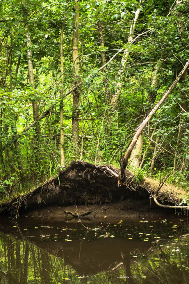 Hulkestijnse bos, Fllvoland