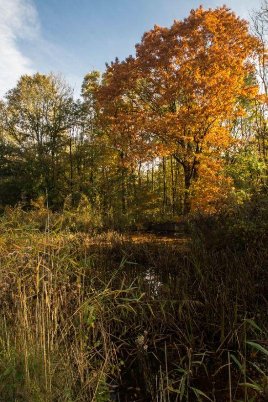 Herfst in het Waterloopbos