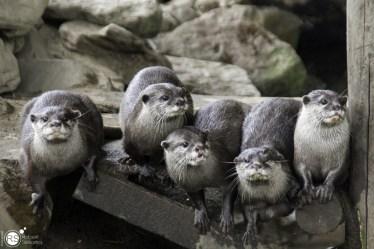 RST_Ouwehands dierenpark Rhenen-oktober 31, 2017-43