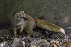 RST_Ouwehands dierenpark Rhenen-oktober 31, 2017-7