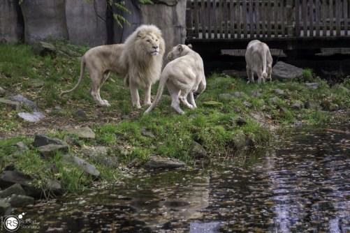 RST_Ouwehands dierenpark Rhenen-oktober 31, 2017-9