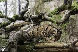 RST_Ouwehands dierenpark Rhenen-oktober 31, 2017-27