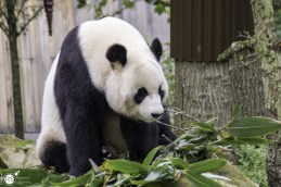 RST_Ouwehands dierenpark Rhenen-oktober 31, 2017-35