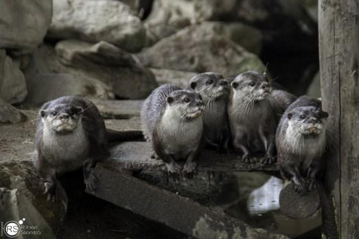 RST_Ouwehands dierenpark Rhenen-oktober 31, 2017-42