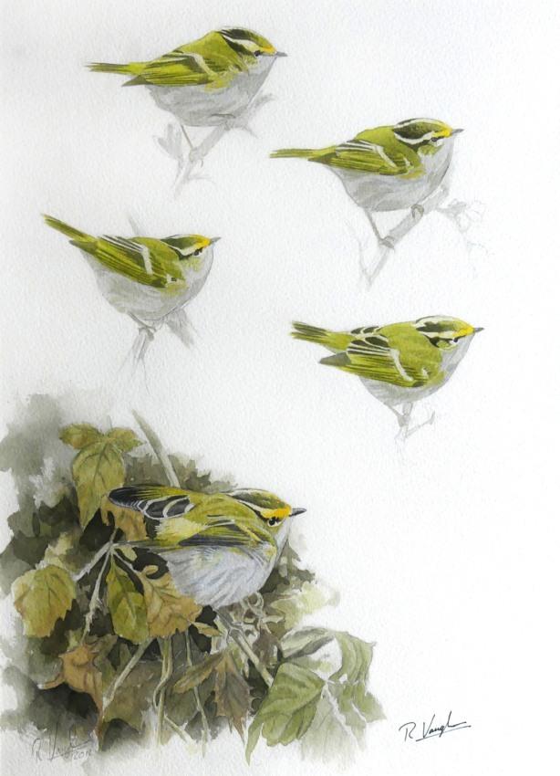 Pallas' Warbler