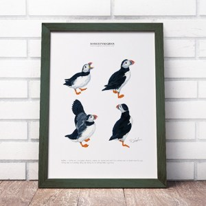 Signed Print Puffins