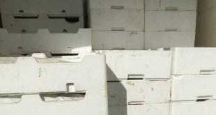 Novellame di alici sequestrate dalla Polizia Stradale di Lagonegro