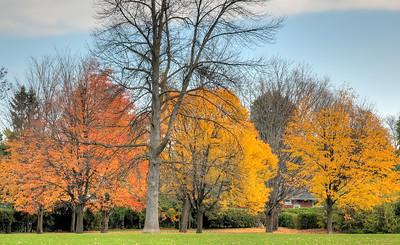 Westwood Park in Autumn.