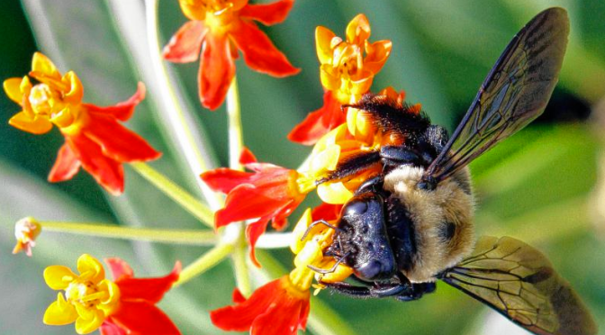 My Turn: Watching the death of a bee; seeing existence stripped bare