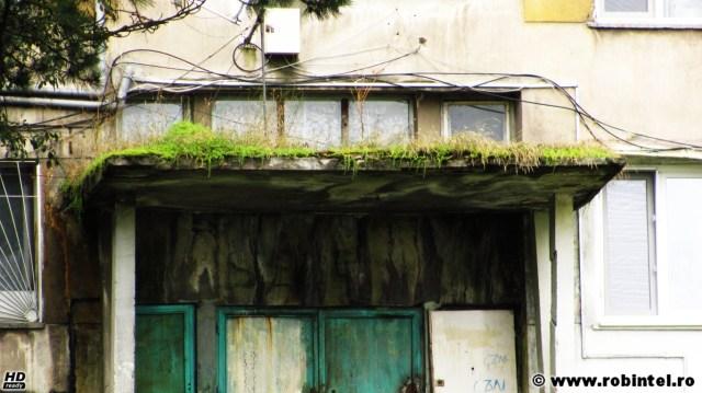 Bloc cu gazon și ferigi la intrarea în scară, la Lupeni