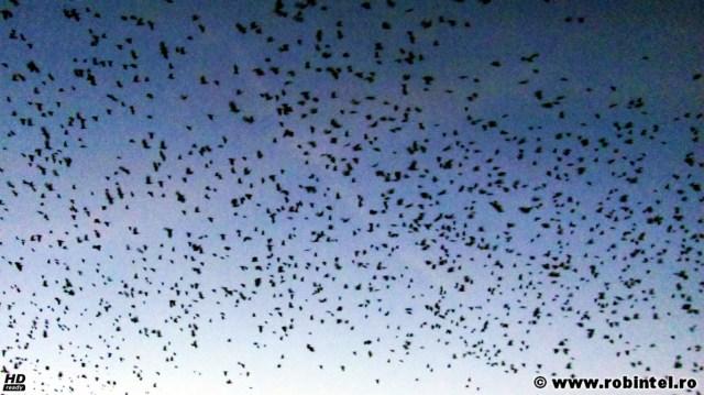 Toamna, cu al său mare și ciudat stol de păsări negre, parcă pictate pe cer
