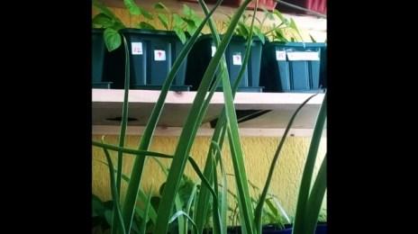 Balcon de bo$$. Sper să nu facem șerpi. #Agricultura la #bloc