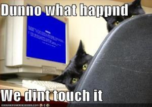 Cats kill computer