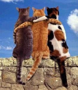 Cats_3cats_hug