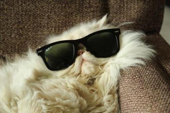 l-Cool-cat