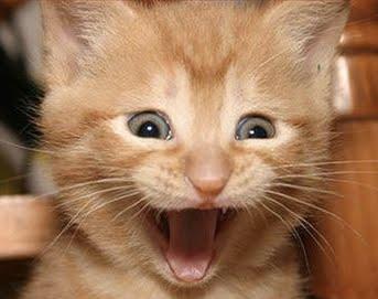 excited cat