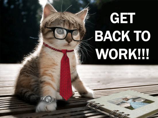work cat