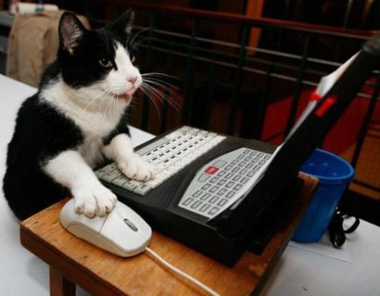 hard-working-Cat