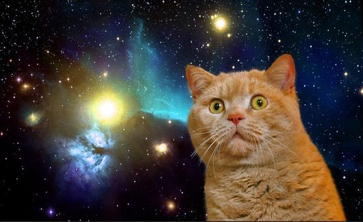 20-space-cat-funny-cat-photos-cats-in-space1.jpg.pagespeed.ce.Cl1Gkd2FY6pD_LsGBEiB