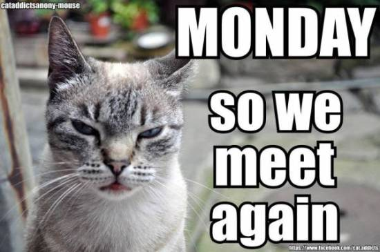 Monday_cat_photie
