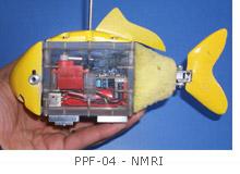 PPF-04 NMRI-Anguille