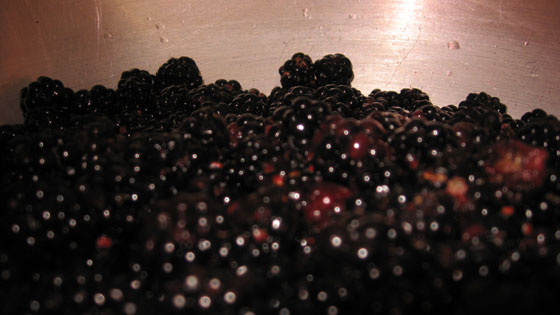 Freshly picked blackberries in the pan