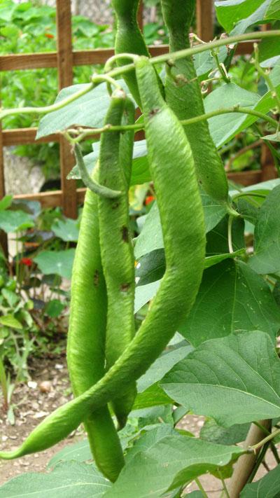 Exquisite tasting beans