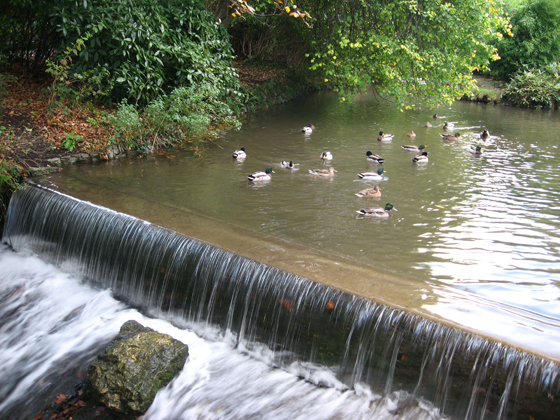 The duck pond in Bicclescombe Park, Ilfracombe