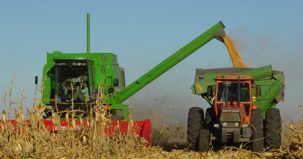 Con precios récord, los productores aceleran la venta de maíz