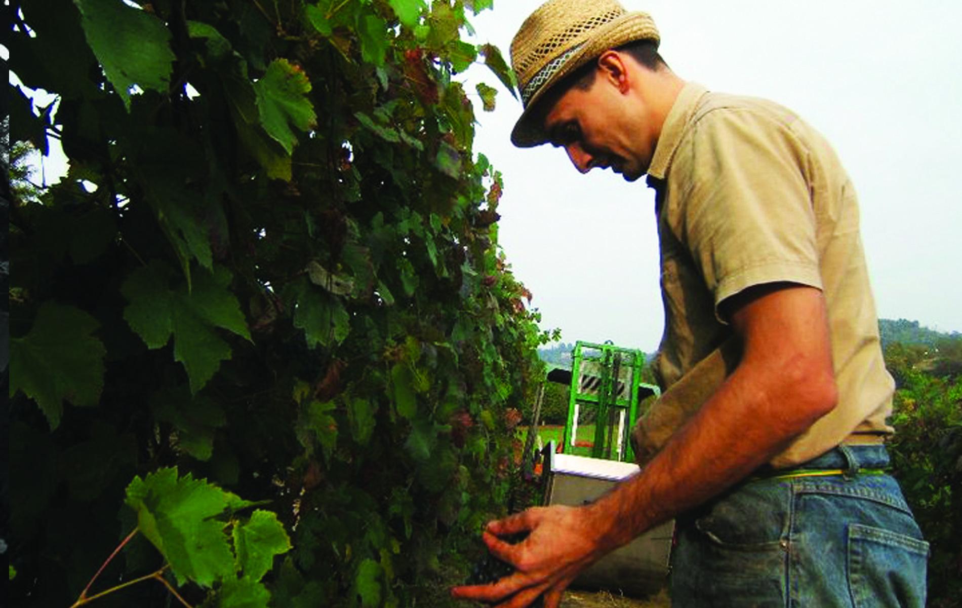 Attenta selezione delle uve
