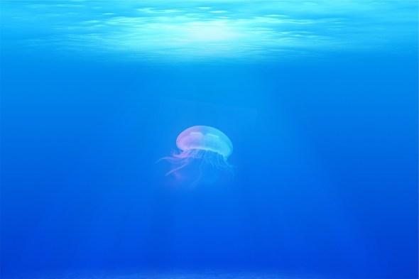 Lo psicologo e l'oceano blu mai più concorrenza