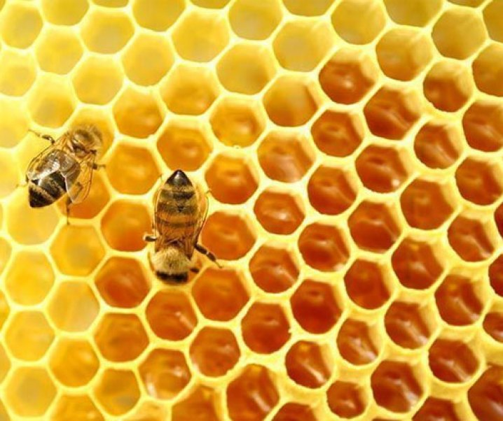La apicultura en la Isla de Pascua (Rapa Nui); potencialidad de desarrollo