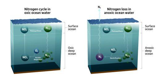 ocean nitrogen